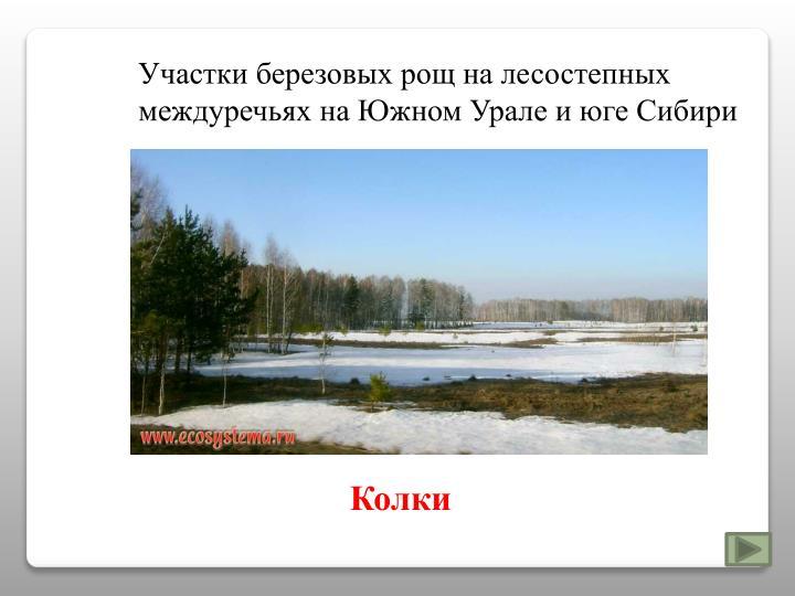 Участки березовых рощ на лесостепных междуречьях на Южном Урале и юге Сибири