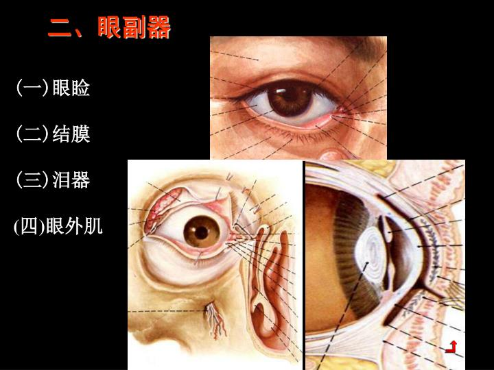 二、眼副器