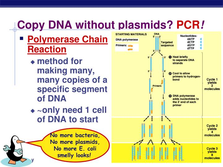 Copy DNA without plasmids?