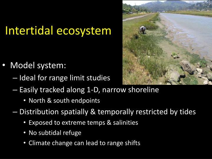 Intertidal ecosystem