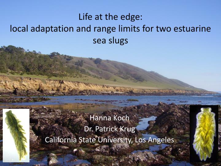 Life at the edge local adaptation and range limits for two estuarine sea slugs