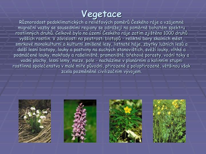 Vegetace