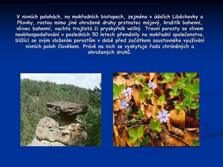 V nivních polohách, na mokřadních biotopech, zejména v údolích Liběchovky a Pšovky, rostou mimo jiné ohrožené druhy prstnatec májový, kruštík bahenní, všivec bahenní, vachta trojlistá či pryskyřník veliký. Travní porosty se vlivem neobhospodařování v posledních 50 letech přeměnily na mokřadní společenstva, blížící se svým složením porostům v době před začátkem soustavného využívání nivních poloh člověkem. Právě na nich se vyskytuje řada chráněných a ohrožených druhů.
