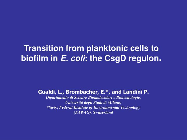 Transition from planktonic cells to biofilm in