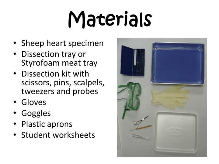 Ppt Sheep Heart Dissection Powerpoint Presentation Id