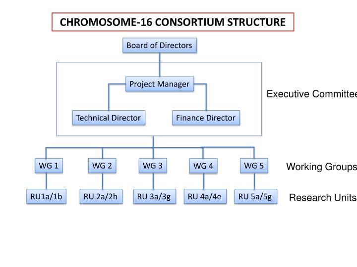 CHROMOSOME-16 CONSORTIUM STRUCTURE