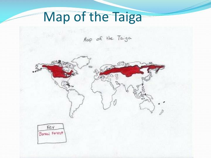 Map of the taiga