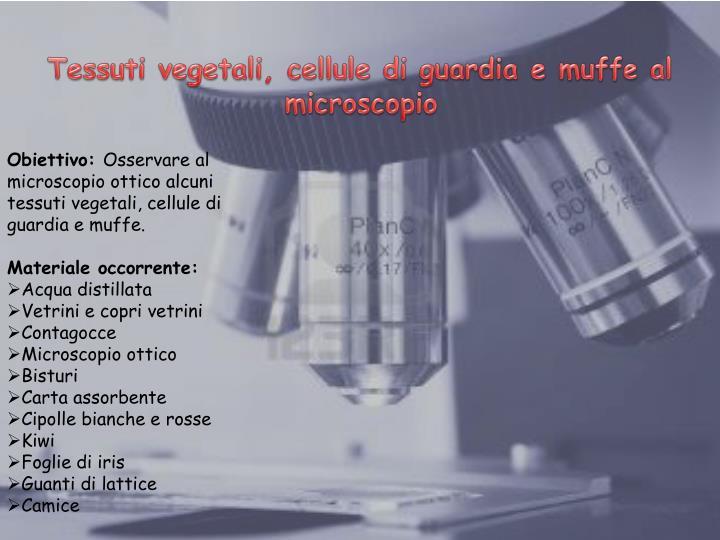 Tessuti vegetali, cellule di guardia e muffe al microscopio