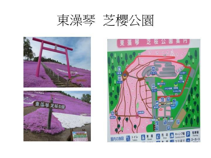 東澡琴  芝櫻公園