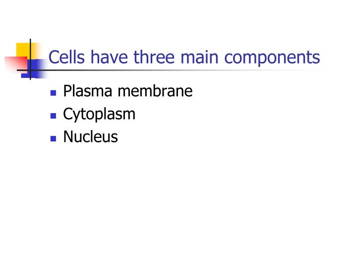 Cells have three main components