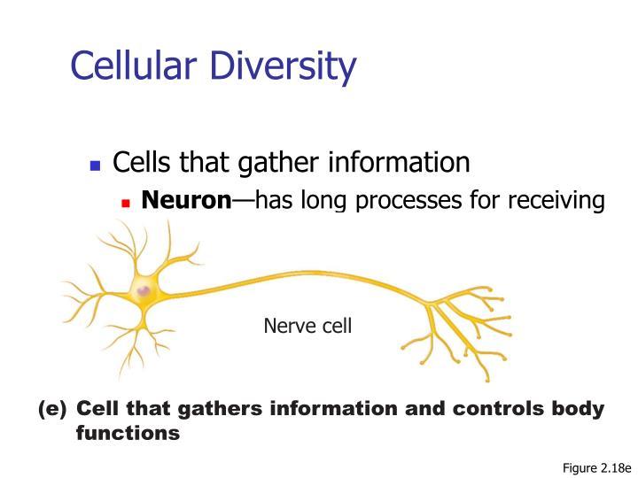 Cellular Diversity