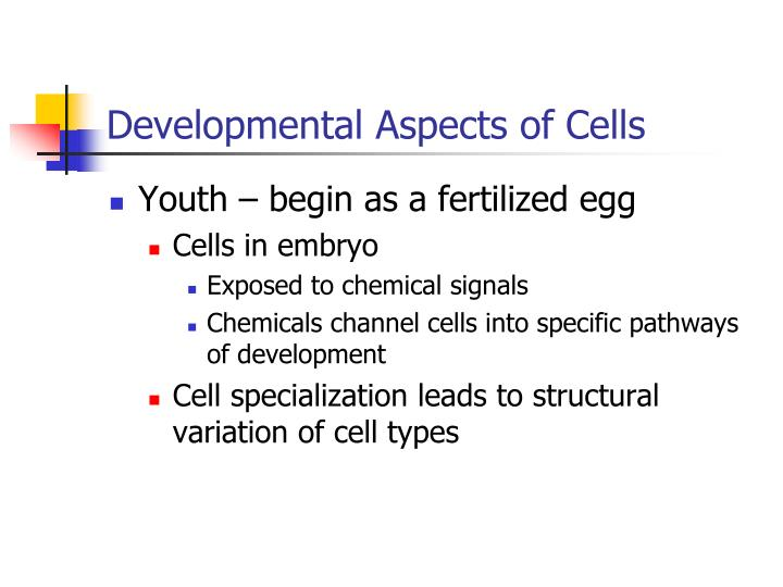 Developmental Aspects of Cells