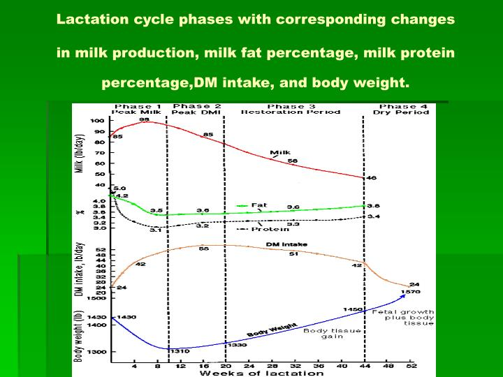 Lactation cycle phases with corresponding changes