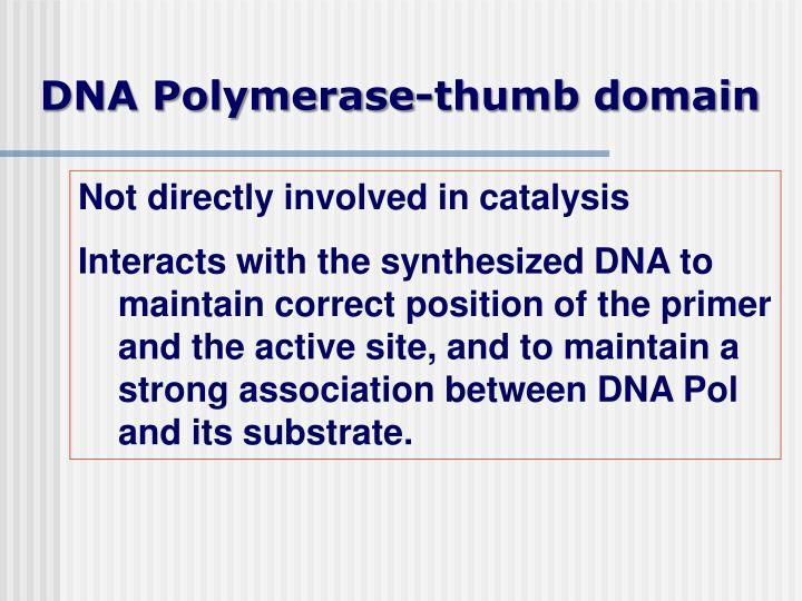 DNA Polymerase-thumb domain
