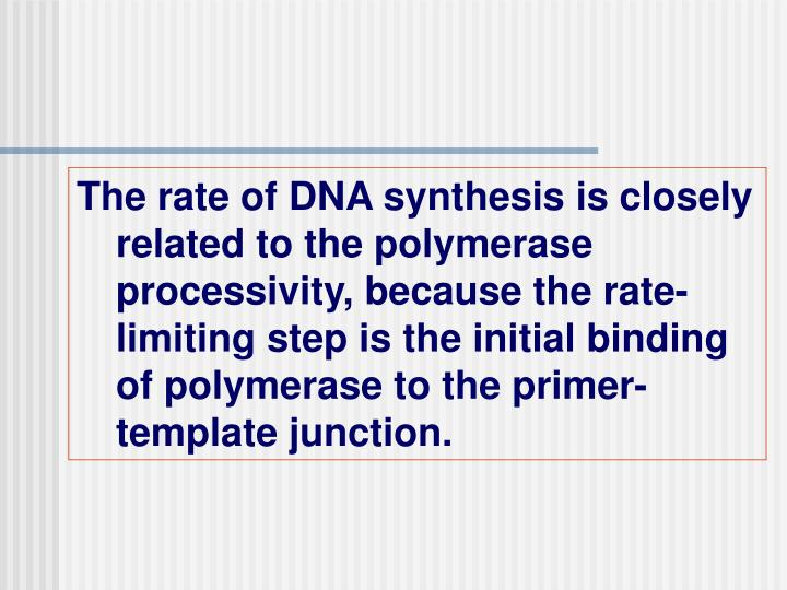 The rate of DNA synthesis is closely related to the polymerase processivity, because the rate-limiting step is the initial binding of polymerase to the primer-template junction.