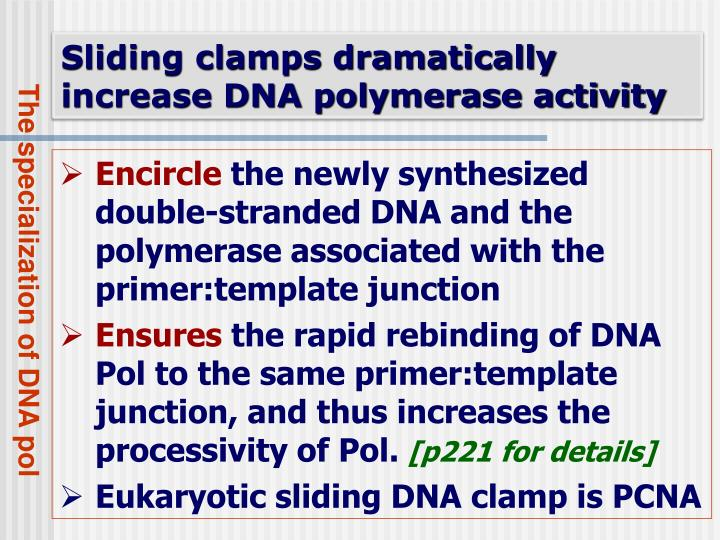 Sliding clamps dramatically increase DNA polymerase activity