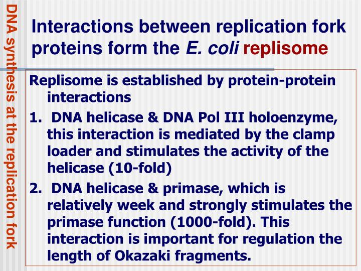 DNA synthesis at the replication fork