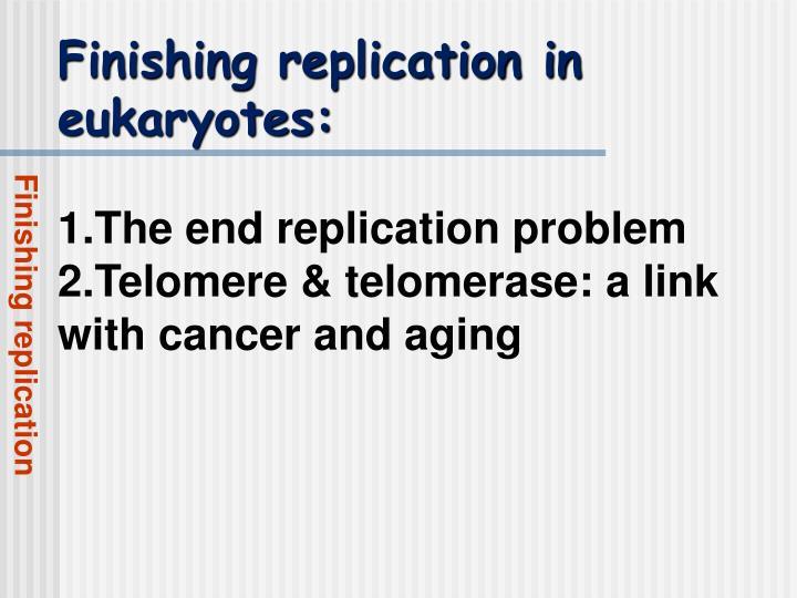 Finishing replication in eukaryotes:
