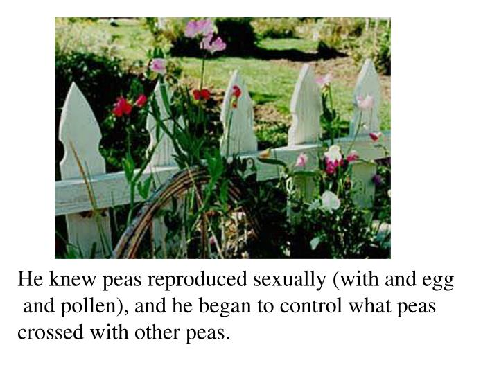 He knew peas reproduced sexually (with and egg