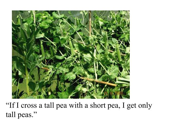 """If I cross a tall pea with a short pea, I get only"