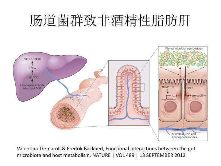 肠道菌群致非酒精性脂肪肝