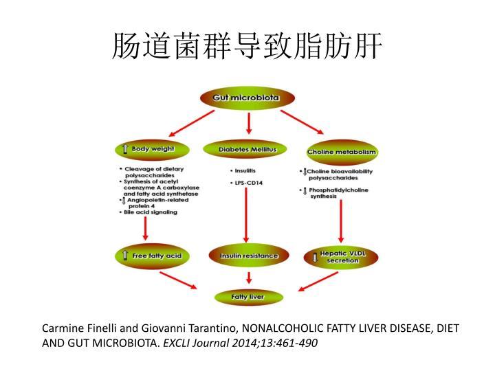 肠道菌群导致脂肪肝