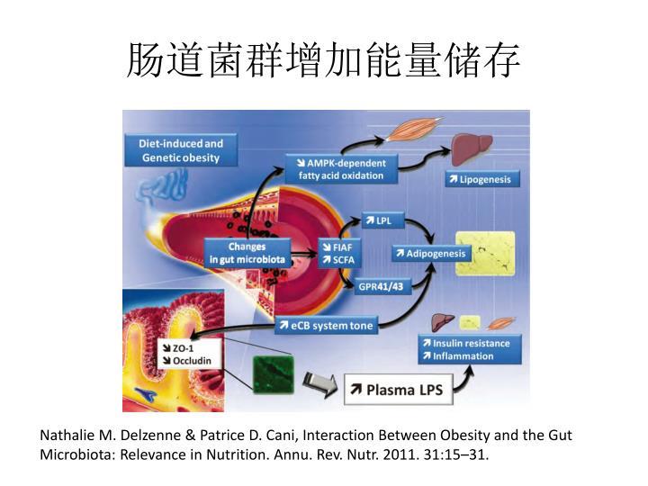 肠道菌群增加能量储存