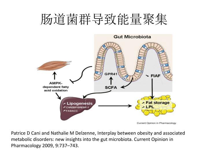 肠道菌群导致能量聚集