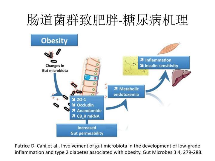 肠道菌群致肥胖