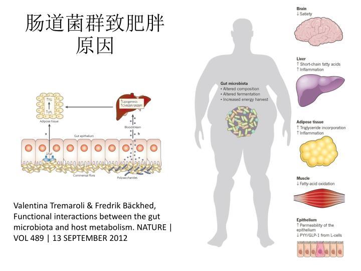 肠道菌群致肥胖原因