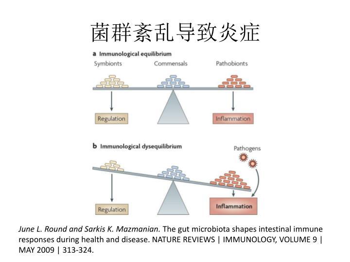 菌群紊乱导致炎症