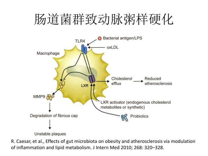 肠道菌群致动脉粥样硬化