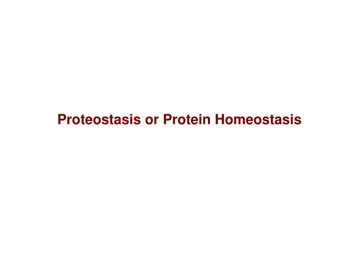 Proteostasis or Protein Homeostasis
