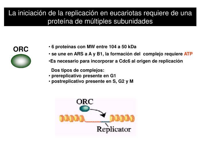 La iniciación de la replicación en eucariotas requiere de una proteína de múltiples subunidades