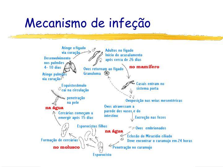 Mecanismo de infeção