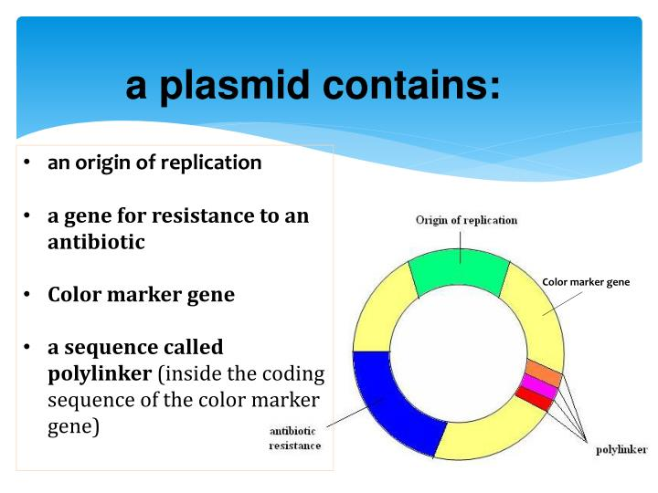 a plasmid contains: