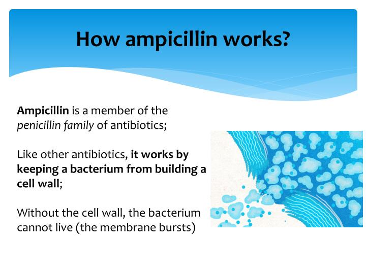 How ampicillin works?