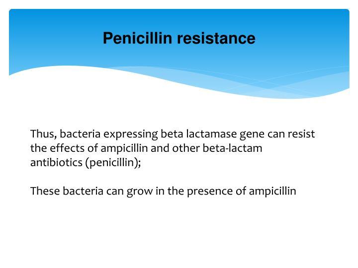 Penicillin resistance