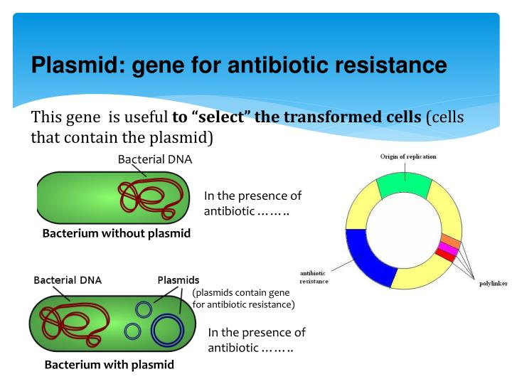 Plasmid: gene for antibiotic resistance