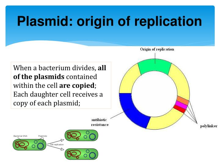 Plasmid: origin of replication