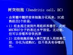 dendritic cell dc