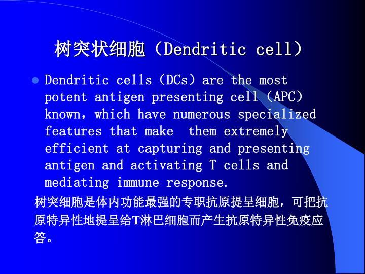 树突状细胞