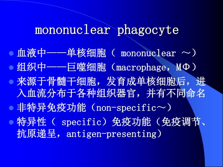 mononuclear phagocyte