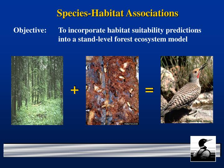 Species-Habitat Associations