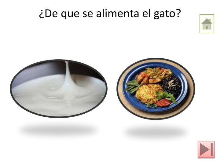 ¿De que se alimenta el gato?