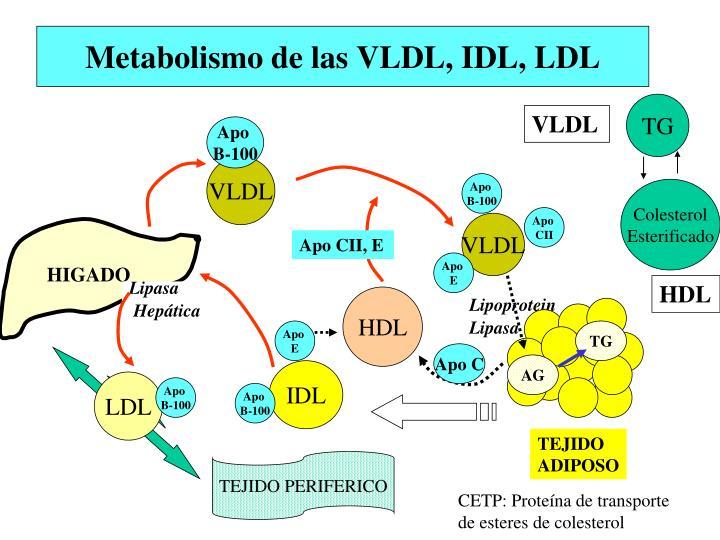 Seis metabolismo insulina los secretos que no de ninguna manera sabía