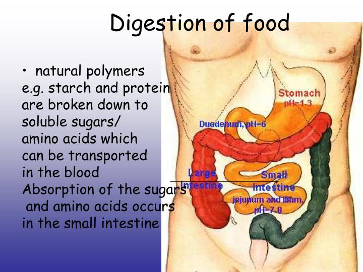 Digestion of food