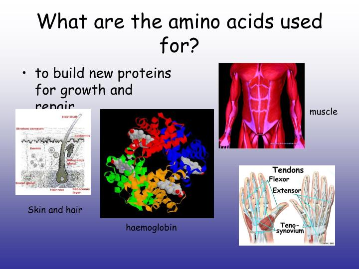 What are the amino acids used for?
