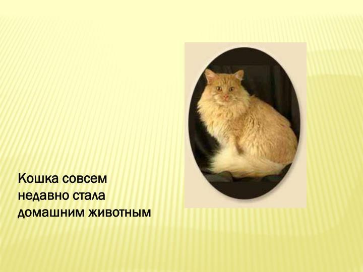 Кошка совсем недавно стала домашним животным