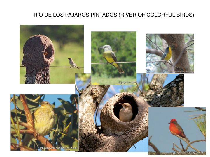 RIO DE LOS PAJAROS PINTADOS (RIVER OF COLORFUL BIRDS)